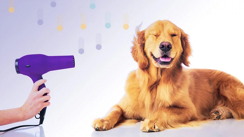 For your pet, find out the best pet grooming online store for convenience.